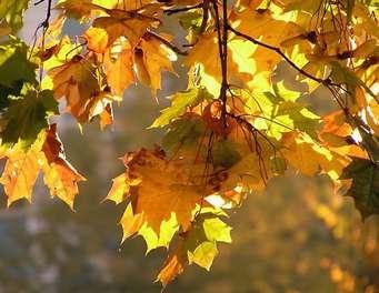 Сочинение на тему «Осень», 3 класс